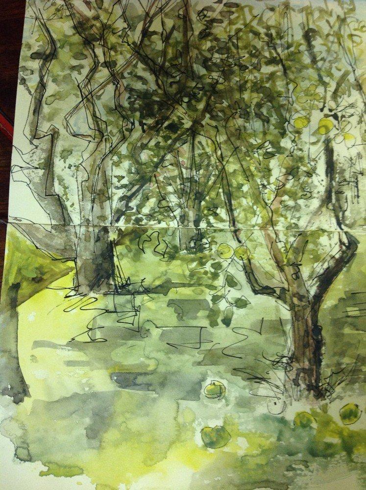 Bruton Orchard