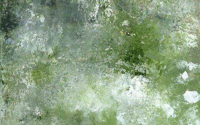 Shaftesbury Stone (7)